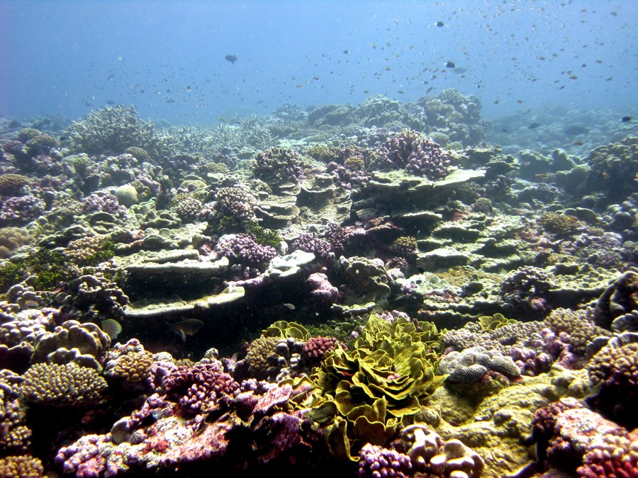 Oceans are deeply affected by pollution